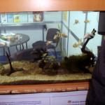 ribki stara zagora
